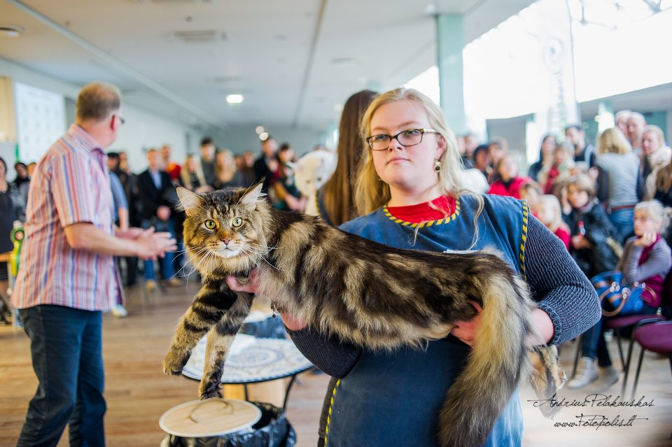 International Cat Show Vilnius 2012