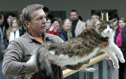 Maine Coon Ezi Chris - the Heaviest Cat in Lithuania