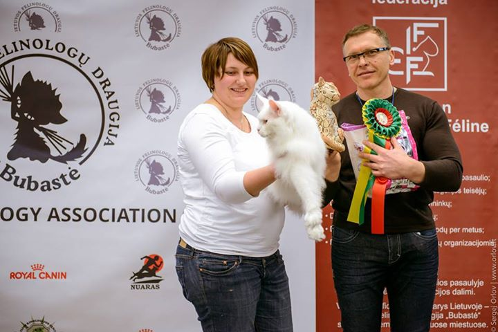 International Cat Show Siauliai'2015