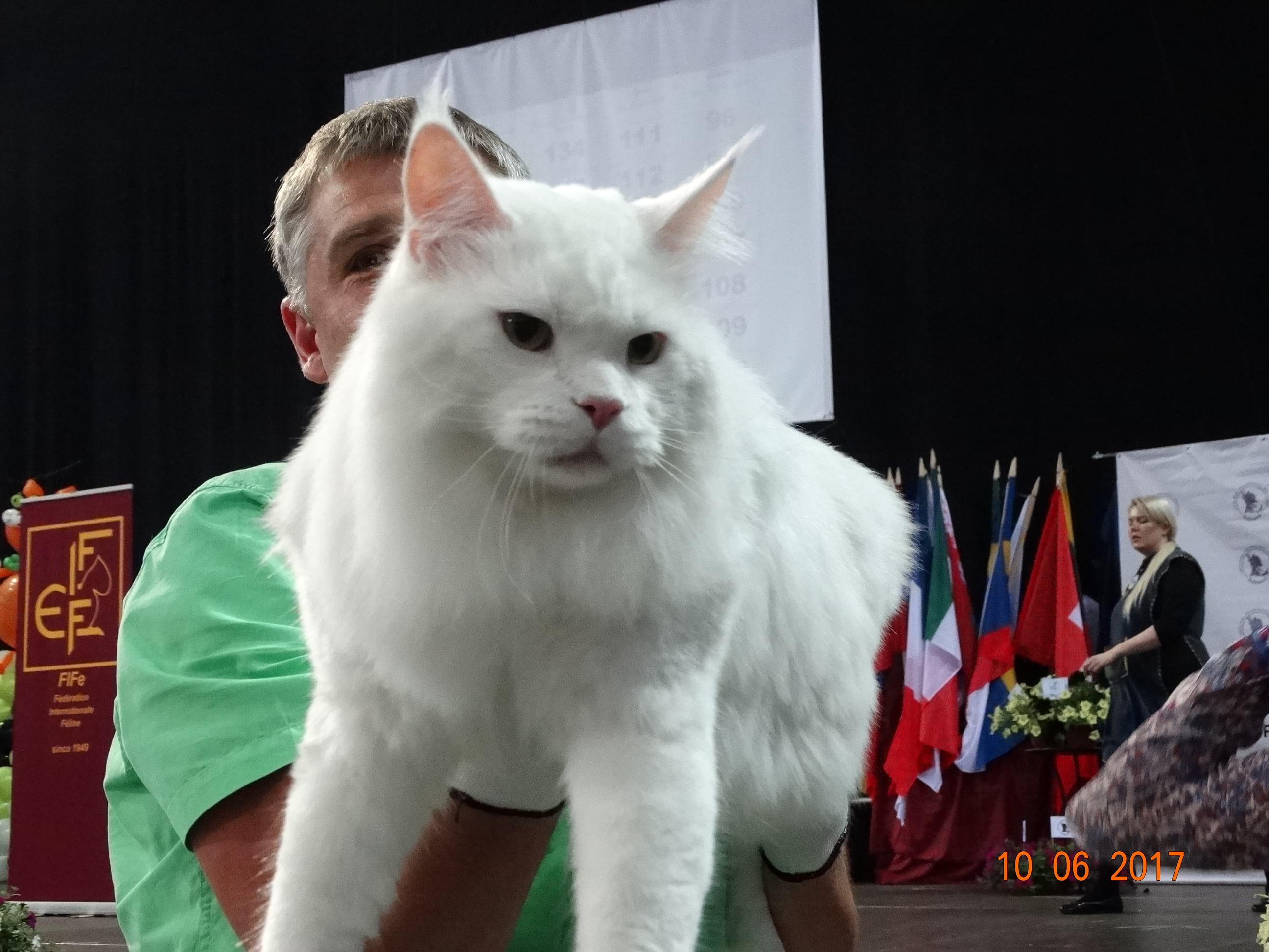 International Cat Show - Baltic WINNER'2017
